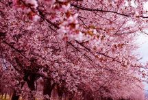 SPRING / #printemps #spring #rose #pink #flowers