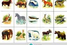 beautiful nature cards matching