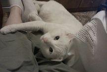 Μπιανκο / ο γατος μου