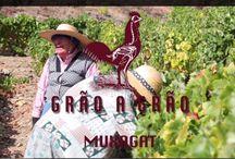 Portuguese Wines / Portuguese Wines