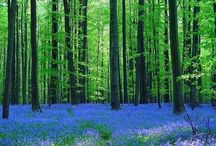 Foresta di Halle