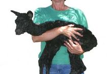 The Ranch / We welcome visitors on the 2nd Saturday of each month. We also offer classes in alpaca care and Fiber Arts.  Check our website for more information: http://www.alpacalink.com