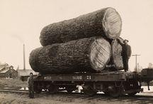 Wood/Lumber History / by Rare Earth Hardwoods