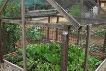 Trädgård!