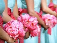 wedding / by Jamie Martin