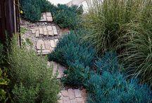Modern Planting Styles