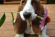 Pets to consider huhu