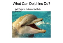 Dolphins - our class theme / by Diana Roehr