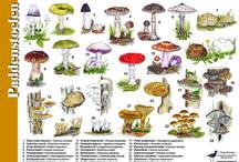 Natuur / Biologie