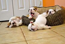 """TCFW--Too Cute for Words / Things that make you go """"Awwww, that's so cute!"""" / by Mary Beth Dagit"""