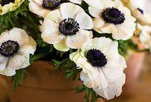 Budding Beauty / wedding flowers / by Megan Luna