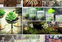 Gardening / by Rebecca Williams Whitaker