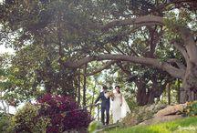pre-wedding lavender bay ideas