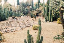 Cacti suku
