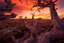 Picturesque Landscapes / by Cymoni Larsen