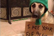 Elf On The Shelf / by Holl