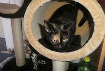 Lili / kočka