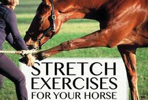 stretch for horses