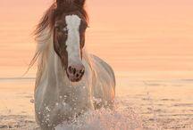 cavallo mega