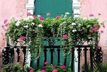 Balcony Love / Drool worthy flowers  / by Monica Grimes