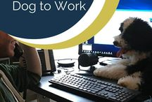 Obsessed with Dogs / We at Infinite Media Corp love dogs! We are even big supporters of bringing your pooch to the office https://www.infinitemediacorp.com/benefits-of-bringing-your-dog-to-work/