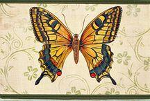 kelebeklerin dünyası