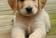 σκυλακια:-):-):-):-)☆☆☆