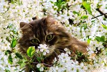 Spring /Весна