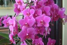 Květiny,svatební kytice a květinové dekorace