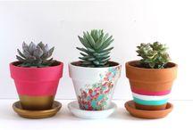 Garden pots paint / Garden