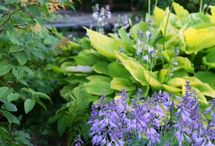 Garden Design & Inspiration / by The Gardener's Eden