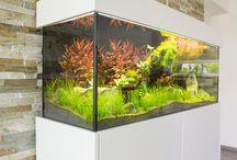 Aquarium Sideboard / Auf dieser Pinnwand sieht man echte Aufnahmen des Aquariums Sideboard. Mehr Informationen unter www.axperto.de