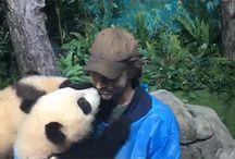 Lee Pace + Pandas