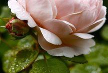 Blommor,natur mm