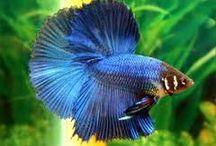 """Fish tank ....><(((""""> / by Shoshi M"""