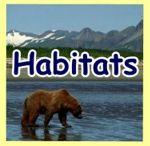 Animal Habitats  / by Pinning Teacher