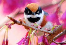 Awesome Animals / by Serena Soboleski