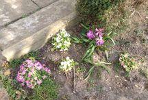 Notre jardin  / #Fleurs / #Arbustes / #Plantes / #Potager / #Jardin / #Permaculture / #Autosuffisance / #Astuces / #Jardinage / #Biodiversité / #Environnement ...