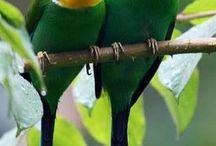 aves incríveis