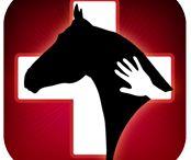Anatomi Häst