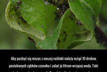 usuwanie szkodników roślin