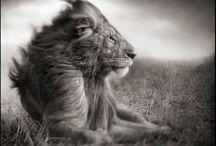 Lionne ;) / by Lo