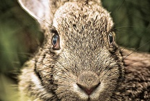 Bunnies and hares