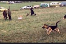DOG: Training