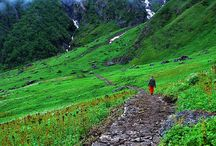 India, the Hills, flora and fauna