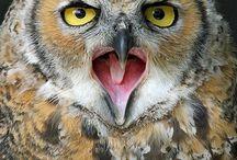 *¨¨* ✽ (͡๏̯͡๏) ♡ Owls ♡ (͡๏̯͡๏) ✽*¨¨*
