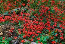 Aubin Grove Native Plants