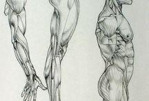 [DOC] Anatomy