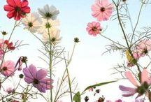 Kauneus Ja Luonto