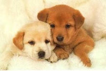 Cute Animals / by Liz Grace Davis